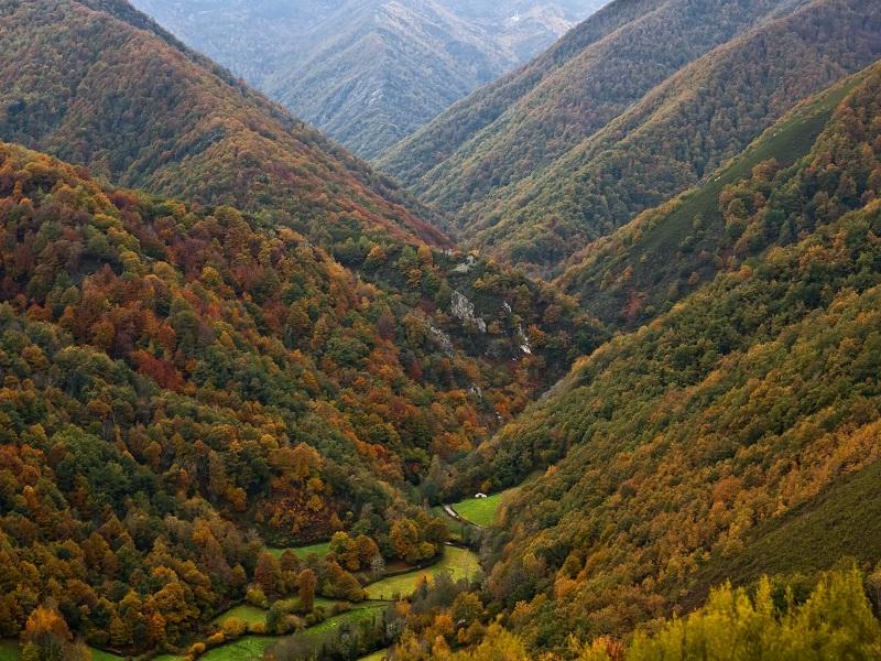 Bosque de Muniellos. Fuentes del Narcea (Asturias)